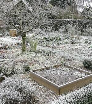 Jardinage hiver